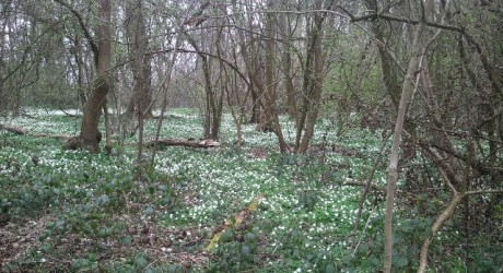 Spring in Ploughman's Forest, Nottinghamshire
